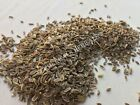 Dill Seed, Anethum graveolens ~ Sacred Herbs from Schmerbals Herbals