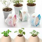 New Creative DIY Mini Lucky Egg Potted Plant Office Desktop Home DZ88