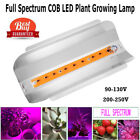 50W Full Spectrum COB LED Grow Light Plant Flower Vegetable IP67 Growing Lamp