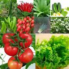 Various Home Gardening Vegetable Balcony Seed Vegetables Potted Plants ER99 01