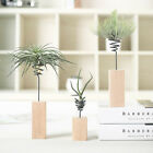 Wooden Air Plant Stand Holder Container Tabletop Tillandsia Planter Desk Display