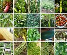 China Vegetable seeds color package garden yard balcony potted 原装春夏秋