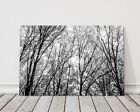 autumn trees black and white printed framed canvas picture landscape