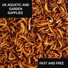JUICY Dried Mealworms Premium Wild Bird Food Large Worms Snacks AAA QUALITY