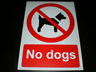No Dogs Plastic Sign Or Sticker Choice Of Sizes Silk Screen Printed Retail Shop