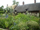 Hardy perennial plants - pay only one postage cost, no matter how many you buy