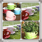 giant teacup planter uk