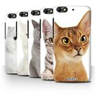 Case/Cover for Huawei Honor 4C / Cat Breeds