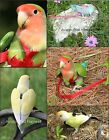 Bird House Ladder Birds Coconut Toy Exercise Play Parakeet Canary Cage Pet