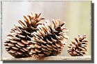 Autumn Pine Cone Picture on Stretched Canvas, Wall Art Decor, Ready to Hang!.
