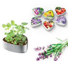 DIY Lavender Pansy Canned Plants Creative Planter Home Office Decor Bonsai Gifts