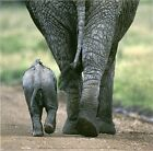 New Elephants Mother and Calf Print CLEARANCE SALE