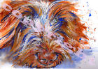 ITALIAN SPINONE Print of Original Watercolour Dog Painting Watercolor by Josie P