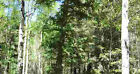 Cheap Oregon Land 2.38 Acres with Many Pine Trees