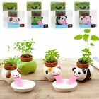 New Ceramic Cultivation Peropon Drinking Animal Tongue Self Watering Planter