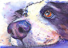 Border Collie PRINT or POSTER of Original Watercolour Dog Sheepdog Painting