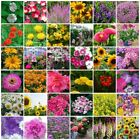 VARIETIES Spring summer Flower Seeds Heirloom NON-GMO with name picture 109-144