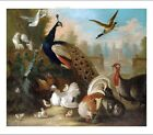 MARMADUKE CRADDOCK Peacock & Birds CANVAS, PAPER choose SIZE, from 55cm up, NEW