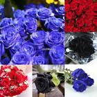 50 Particle Rose Seeds Bonsai Flower Seeds Home Garden Balcony Plants N98B