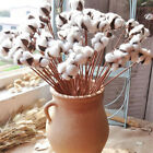 Natural Dried Flowers Cotton with Stem DIY Decorative Flower Home Party Decor