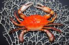 Crab Shack Decor, Lifelike Steamed Crab Replicas, Three Dimensional, 6 inch