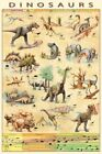 Dinosaurs Poster Jurassic Age Timeline Species 61x91.5cm