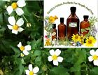 BIDENS PILOSA  HERBAL TINCTURE (LYME, MRSA, INFECTIONS) ~ MULTIPLE SIZES $9.95 USD on eBay