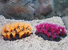 CC389 AQUARIUM FISH TANK MARINE REEF FLOWER CORAL CORALS ORNAMENT DECORATION