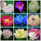 60 Kinds Lotus Seeds Bowl Water Lily Pad Nymphaea Nelumbo Pond Plants Flower New