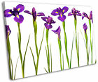 Purple Iris Flowers Floral Framed Canvas Wall Art Picture Print