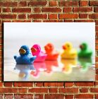 RUBBER DUCKS BATHROOM CANVAS WALL POP ART BOX PRINT PICTURE SMALL/MEDIUM/LARGE