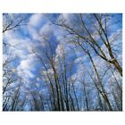 Poster Print Wall Art entitled Low angle view of bare tre...