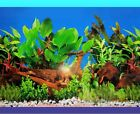 AQUARIUM BACKGROUND POSTER - PLANTS WITH LOG - 50cm or 60cm(H) - BUY by METRE