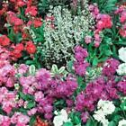 Outsidepride Stock Mix Flower Seeds
