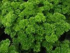 Parsley Seeds (30 seeds, 60 seeds, 120 seeds, 240 seeds, 480 seeds)