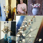 1/10x Natural White Cotton Dried Flowers Stem Rural Bouquet Home Craft Party DIY