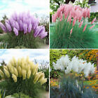 20Pcs/Bag New Rare Garden Cattail Reed Pampas Grass Seeds Ornamental Plant
