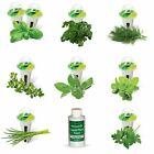 Aerogarden Pods Herb Seed Kit Gourmet Indoor Garden Supplies Home Decorations