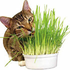 800X Organic Wheatgrass Wheat Grass Seeds For Sprouting Pets Health