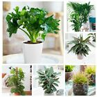 100pcs Green House Plants Easy To Care Philodendron Calathea Monstera Seeds DIY