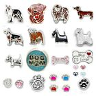 Buy 3, Get 2! Floating Charm DOG ~ 23 Styles ~ PAW PRINTS BONE for Living Locket