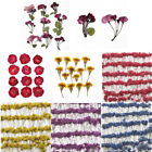 2Packs Real Pressed Flower Dried Flowers for Art Craft Resin Jewelry Making Gift