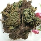 Rose of Jericho Dinosaur Plant Air Fern Spike Moss Live Resurrection Plant