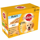 12x Pedigree Puppy Dog Food Jelly Chicken Lamb Poultry Beef Rice Sachets Box