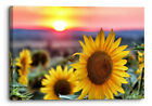 Vichy, France Sunflower Sunset Canvas Wall Art Picture Home Decor