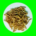 Bird Food, Chicken Feed, Winter Food for Birds, Meal Worms Fd Dried