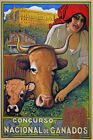 COW BABY CATTLE SPAIN SPANISH GIRL EUROPE REPRO POSTER