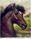 3853.Horse Painting Vintage POSTER.Powerful Graphic Design. Animal Art Decor.