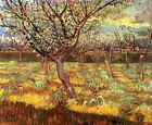 "Vincent Van Gogh- Apricot Trees in Blossom - 20""x26""   on Canvas"