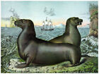 Decor Wild Life Poster. Fine Graphic Art. Sea-lions. Home Wall Design. 1202